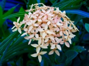 pastel-cluster
