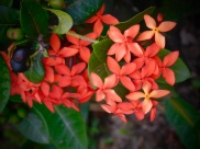 red-cluster