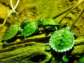 teeny-turtles-jackson