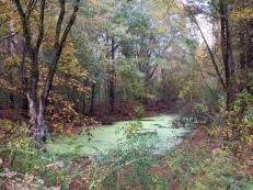 trace-bikeway-pond