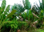 tropical-foliage