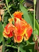 unknown-flower