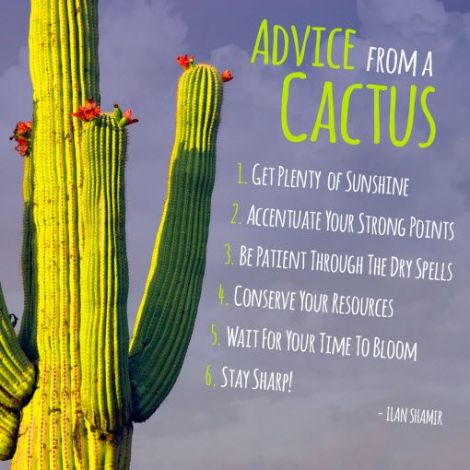 advice from cactus