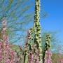 cactus knobbly