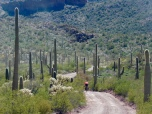 Cycling in Cacti
