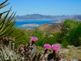 Lake Mead overlook